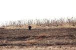 Inside DPRK burdains-Farmers